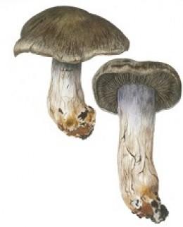 Image de l'actualité Balade mycologique à la Ruchère