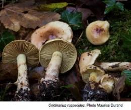 Image de l'actualité Balade mycologique automnale au Col du Sapenay