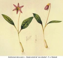 Image de l'actualité  Botanique Printanière à Chanaz
