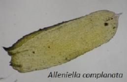 Image de l'actualité Mycologie et Bryologie dans la forêt de Corsuet