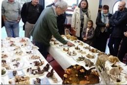 Image de l'actualité Présentation de champignons à Voglans