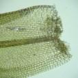 Miniature « Grimmia_alpestris_feuille_base1_TD » de l'espèce « Grimmia alpestris (F.Weber & D.Mohr) Schleich. »