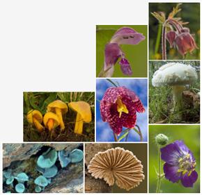 Botanique et Mycologie en Savoie